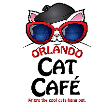 Feline Fun at the Orlando Cat Cafe
