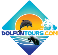 DolFun Tours - 90 Minute Dolphin Tour
